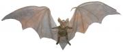 brown-hanging-vampire-bat